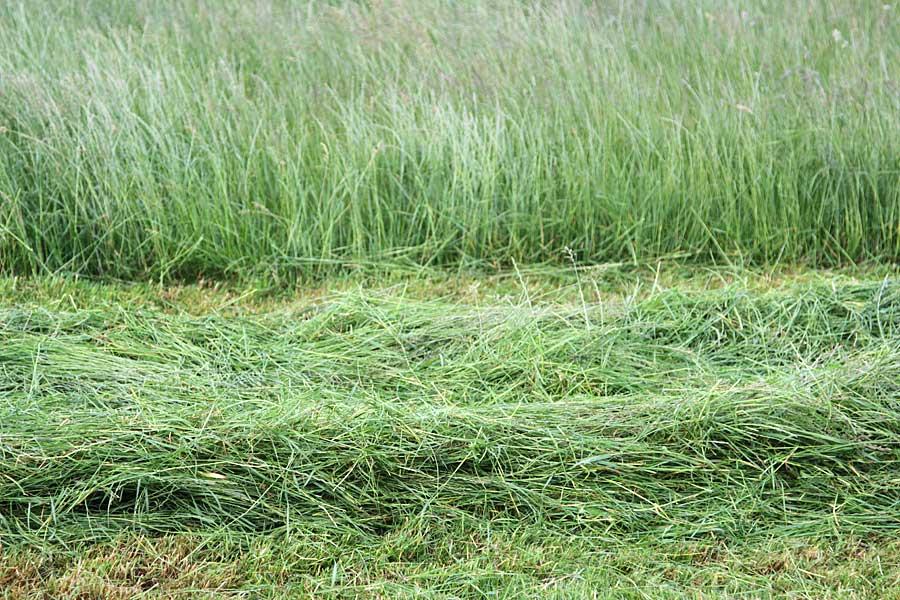 Das Gras darf nicht zu lange anwelken, © ballensilage.com