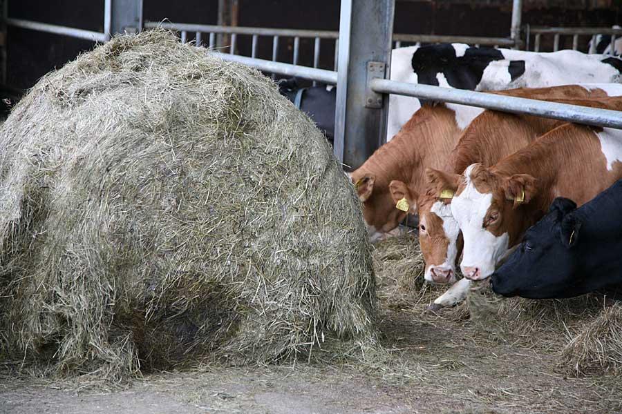 Rundballen verfüttern, © ballensilage.com