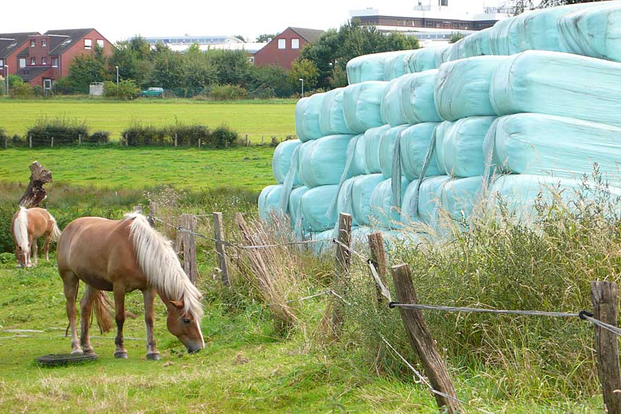 Horses and square bales, © ballensilage.com