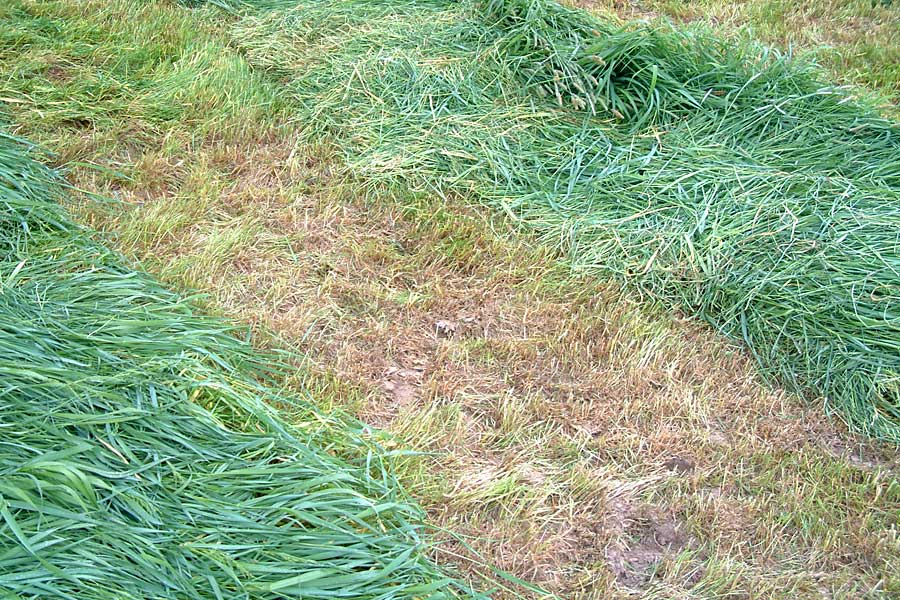verletzte Grasnarbe, © ballensilage.com