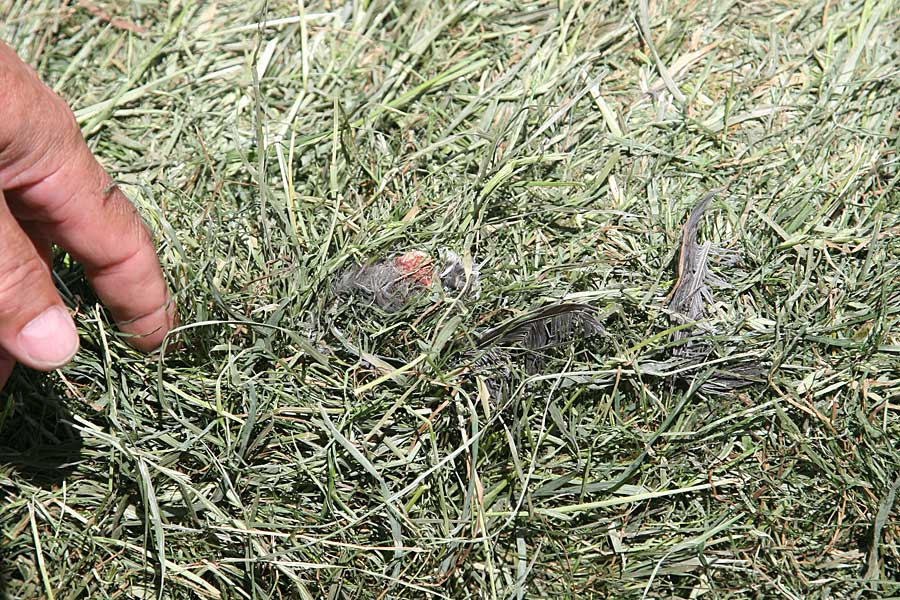 Reste eines Vogels, © ballensilage.com