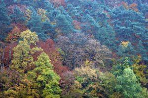 Herbstwald, © ballensilage.com