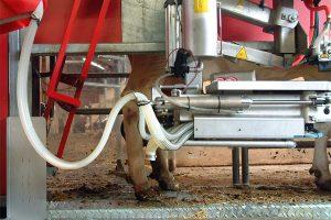 Melkroboter, © ballensilage.com