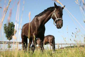 Pferdekoppel, © ballensilage.com