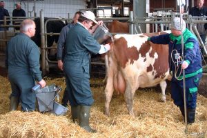 tierärztliche Behandlung, © ballensilage.com