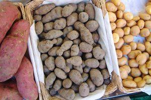 Kartoffelsorten, © ballensilage.com