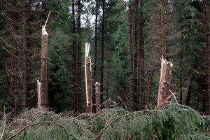 Sturmschäden im Wald, © ballensilage.com