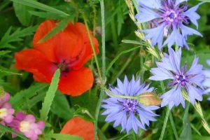 Feldblumen, © ballensilage.com