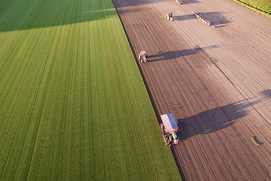 Rollrasenproduktion des Betriebs Cord Matthies, © LWK Niedersachsen / Wolfgang Ehrecke