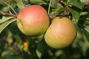 Äpfel, © ballensilage.com