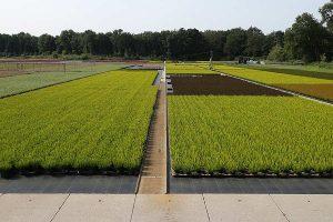 Gartenbaubetrieb, © ballensilage.com