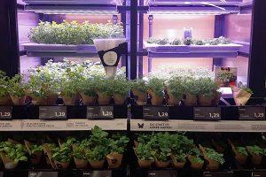 Indoor Farming mit Kräutern im Supermarkt, © getreidekonservieren.de
