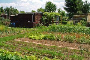Gemüsegarten, © ballensilage.com