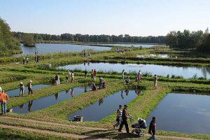 Niedersächsische Teichlandschaften und Großteichanlagen – wie hier die Teichwirtschaft Aschauteiche im Landkreis Celle – gehören zu den Hotspots des Artenschutzes und der Lebensraumvielfalt, © Teichwirtschaft Aschauteiche