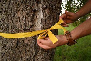 Ein Gelbes Band an Obstbäumen oder -sträuchern signalisiert: Pflücken erlaubt! Hier darf ohne Rückfrage gesammelt werden, © Maren Schulze
