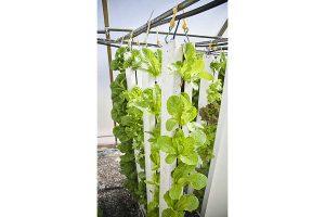 Vertical Farming, © BrightAgrotech / Pixabay