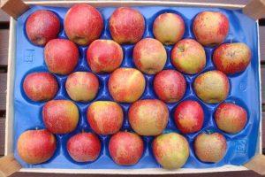 Trotz ihres Erscheinungsbildes frisch, gesund und schmackhaft: Äpfel der Sorte Fresco-Wellant® mit Berostung und Schalenfehlern, © Urte Scholz